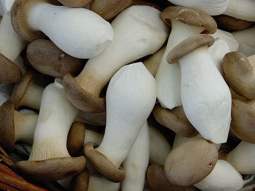 French-horn-mushrooms-Posh-Magazine
